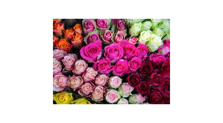 Lo Que Todo El Mundo Debería Saber Sobre El Color De Las Rosas